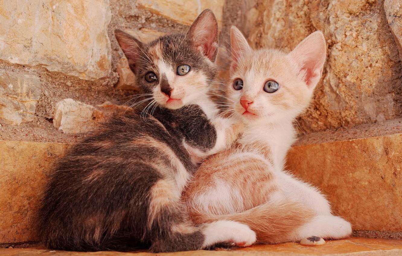 Фото обои котята, малыши, парочка