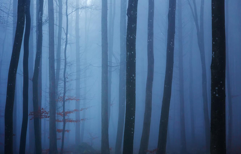 Фото обои лес, деревья, туман, forest, trees, fog, Uschi Hermann