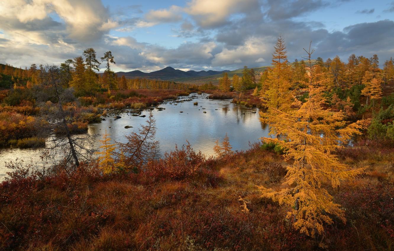 Фото обои осень, лес, небо, горы, берег, водоем, золотая осень, лиственницы
