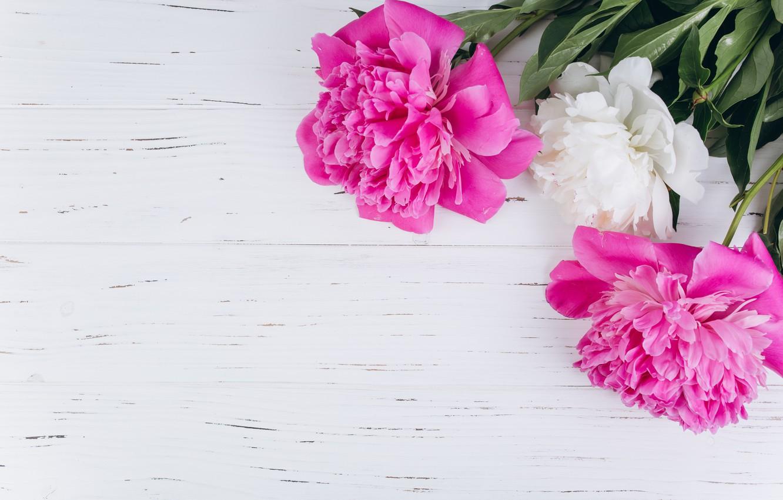 Обои цветы, блюдце, пионы. Разное foto 10