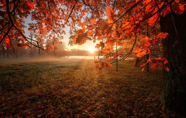 Фото обои осень, солнце, лучи, дерево, рассвет, листва