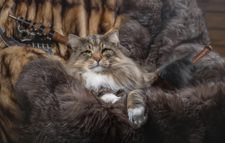 Фото обои кот, животное, меха, Светлана Писарева