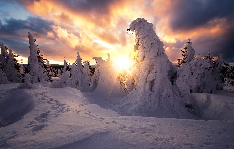 Фото обои зима, солнце, лучи, снег, деревья, пейзаж, следы, тучи, природа, ели