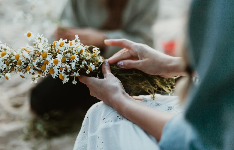 Фото обои лето, девушка, цветы, ромашки, руки, боке