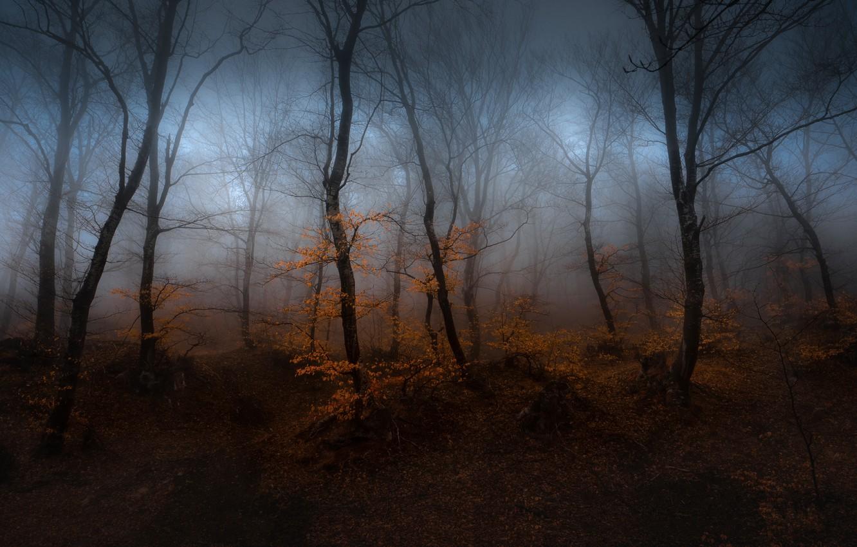 Фото обои осень, лес, деревья, туман, дымка