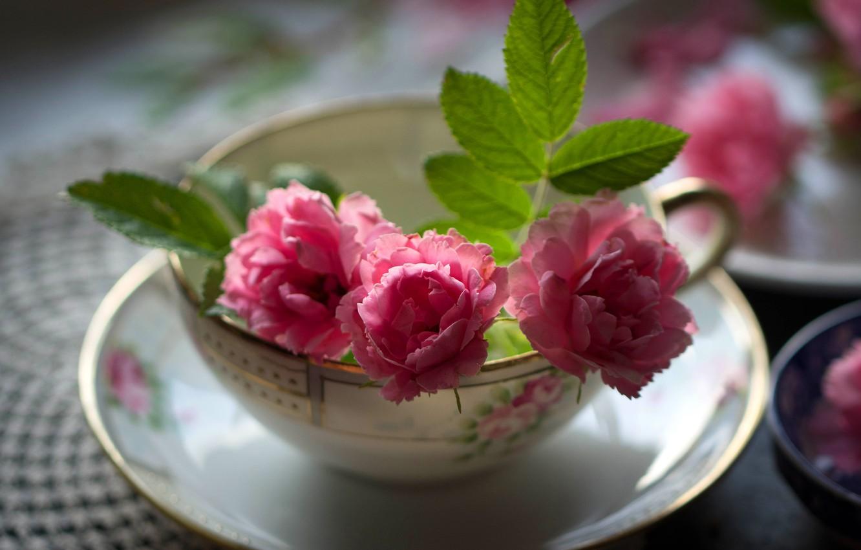 Обои цветы, натюрморт, сервиз, тарелка, стол. Разное foto 12