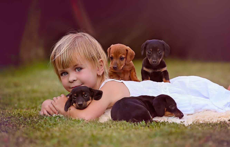 Фото обои собаки, взгляд, настроение, щенки, девочка, друзья
