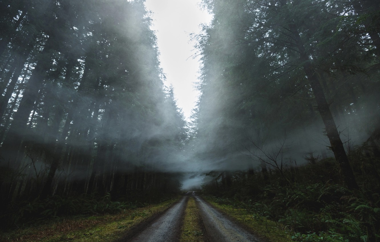 Фото обои дорога, лес, природа, туман, дым, дымка
