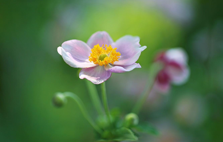 Фото обои цветок, макро, боке