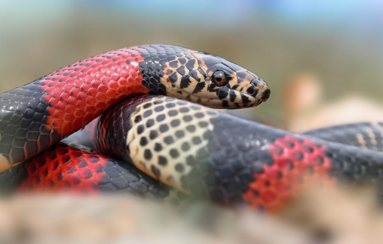 для картинки полосатых змей демпинговым ценам
