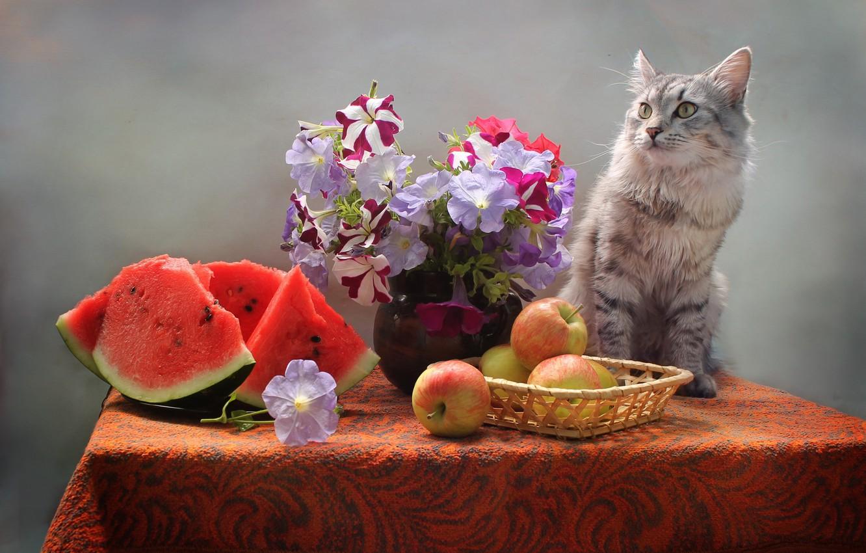 Фото обои кот, цветы, стол, животное, яблоки, арбуз, ваза, корзинка, петуньи, Ковалёва Светлана, Светлана Ковалёва