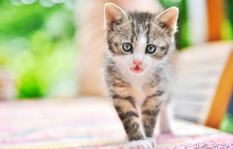 Фото обои взгляд, малыш, мордочка, котёнок, боке