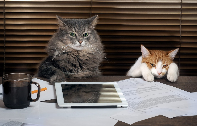 Фото обои кошка, кот, взгляд, стол, серый, фон, работа, кофе, лапки, пушистый, рыжий, пара, начальник, офис, кружка, …
