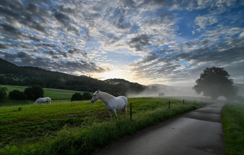 Фото обои дорога, туман, кони