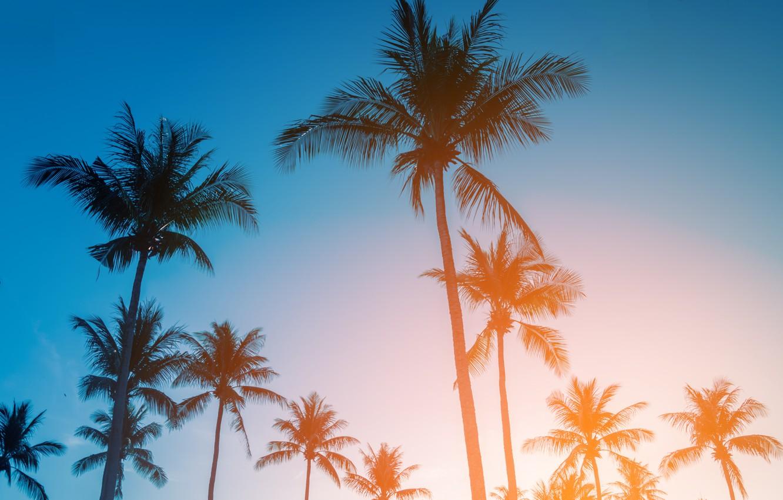 Фото обои пляж, лето, небо, закат, пальмы, берег, summer, beach, sunset, seascape, beautiful, paradise, palms, tropical