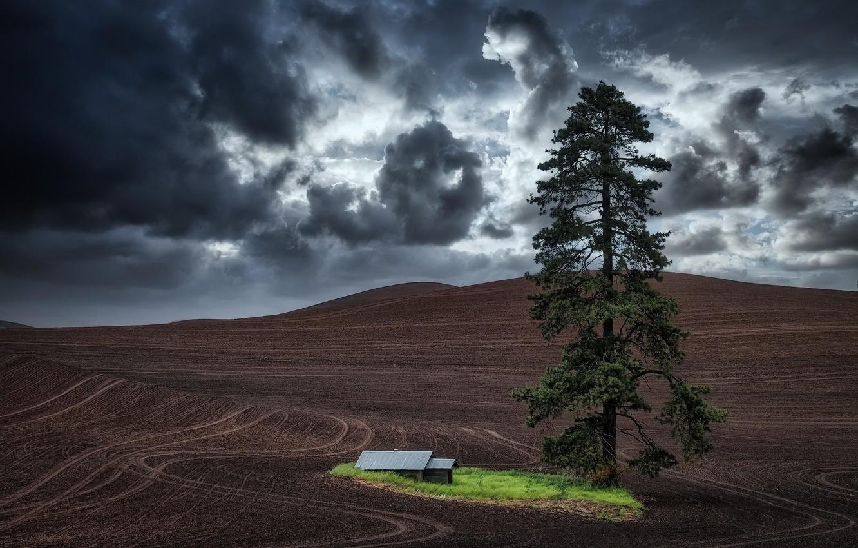 Фото обои Oasis, Washington State, storm clouds, lone tree, tractor tracks, fallow land