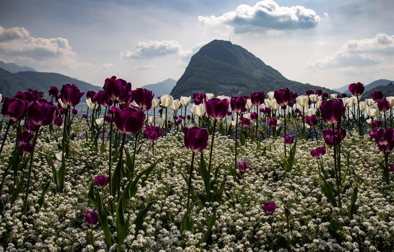 красивые горные пейзажи весна с тюльпанами фото что сейчас