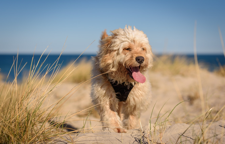Фото обои пляж, друг, собака