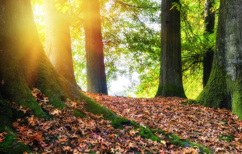 Фото обои осень, лес, листья, деревья, парк, colorful, forest, landscape, park, autumn, leaves, tree, fall