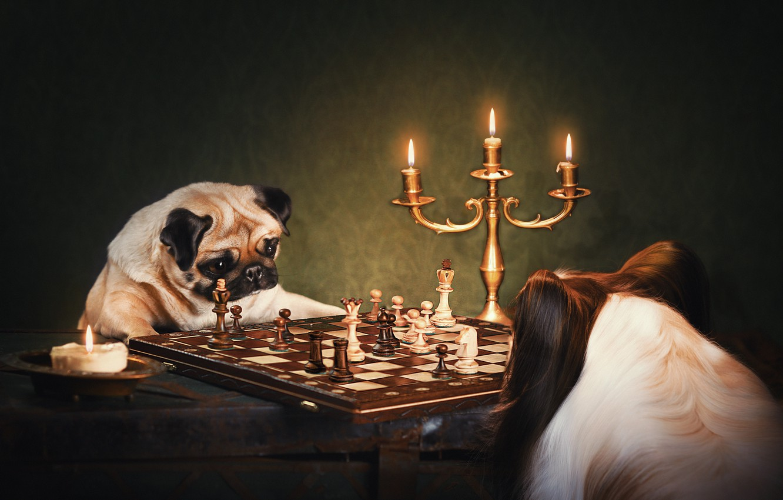 Фото обои собаки, шахматы, подсвечник, Мопс, Папийон, Наталия Поникарова, английский клуб