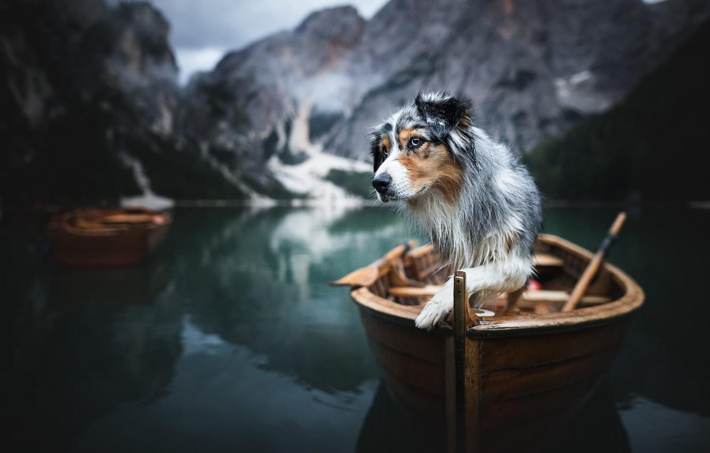 Фото обои горы, природа, озеро, животное, лодка, собака, пёс, Доломиты, аусси