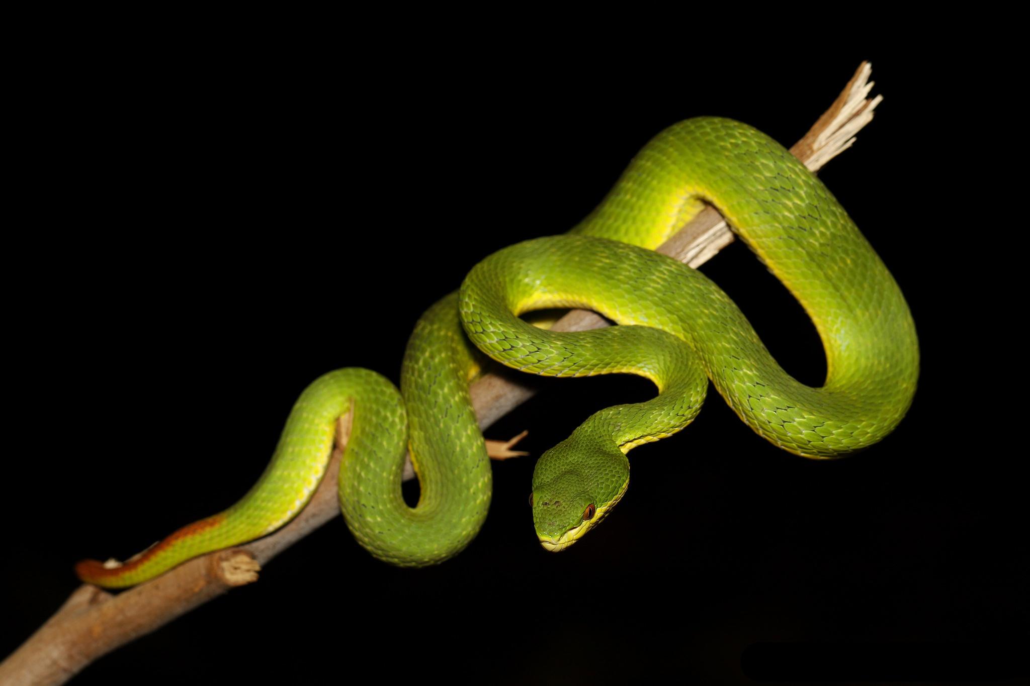 Картинки на телефон движущиеся змеи