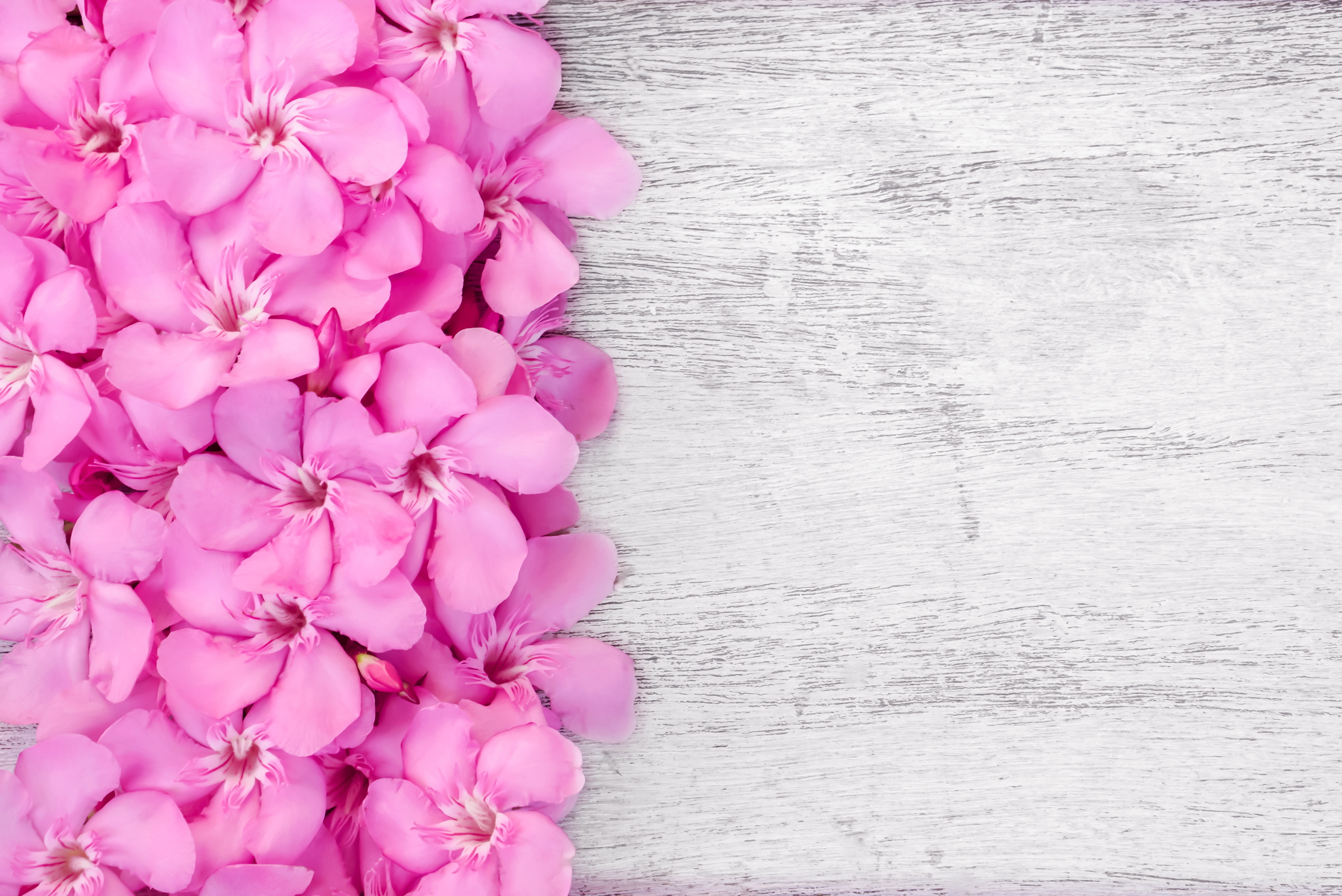 pink and white background - HD4240×2832