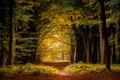Картинка осень, лес, деревья, ветки, желтая листва