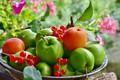 Картинка яблоки, тарелка, фрукты, смородина, абрикосы