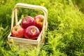 Картинка лето, трава, корзина, яблоки, fruit, apples