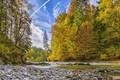 Картинка лес, река, ручей