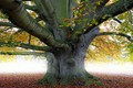 Картинка Природа, Дерево, Листья, Ветки, Ствол